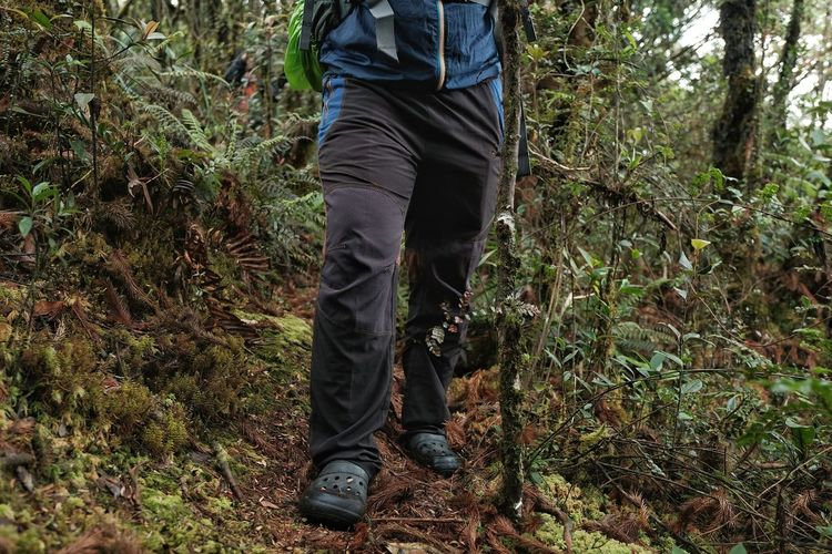 Low section of man standing in forest