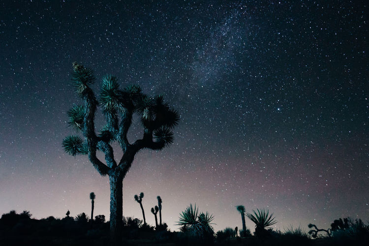 Joshua Tree under the stars. Gradient National Park Astronomy Beauty In Nature Blue Galaxy Growth Landscape Long Exposure Low Angle View Milky Way Nature Night No People Outdoors Purple Scenics Silhouette Sky Star - Space Tranquil Scene Tranquility Tree Tree Trunk Vibrant California Dreamin