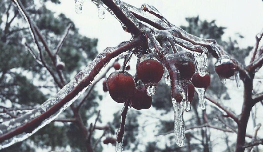 Deepfreeze Redberries Coldweather