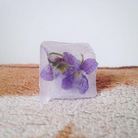Flower Ice Cube Kwiatek Lod