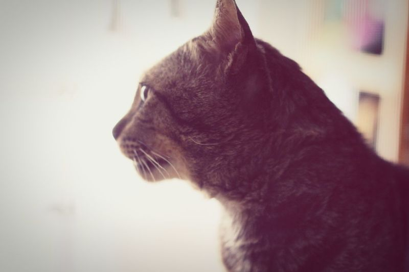 Caogou Cat Catsagram เฉาก๊วย แมว แมวที่บ้าน ทดสอบแอพใหม่