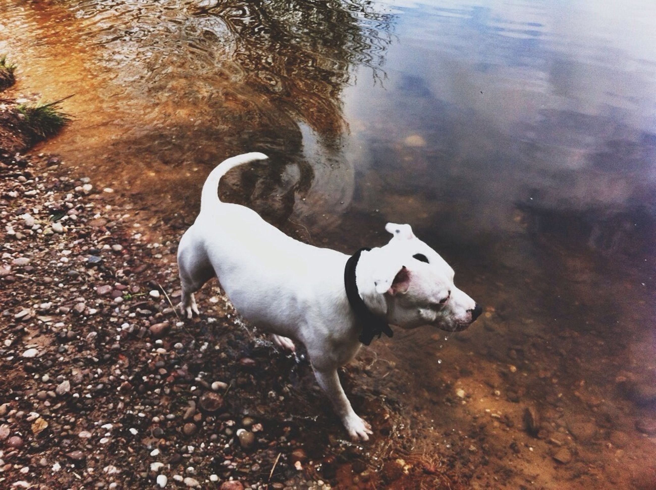 animal themes, domestic animals, mammal, one animal, dog, water, standing, pets, high angle view, nature, full length, walking, outdoors, two animals, day, no people, zoology, lake, field, rock - object