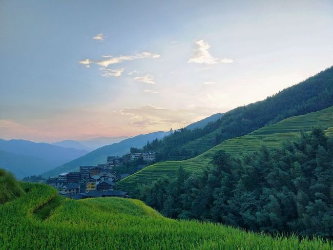 The Week On EyeEm EyeEmNewHere Lost In The Landscape Been There. Zhuang Minorities Village Agriculture Tea Crop Nature Field Landscape Crop  Sky Beauty In Nature Hill Social Issues Outdoors Scenics Rural Scene Green Color Plant Beauty Terraced Field Tourism Tree