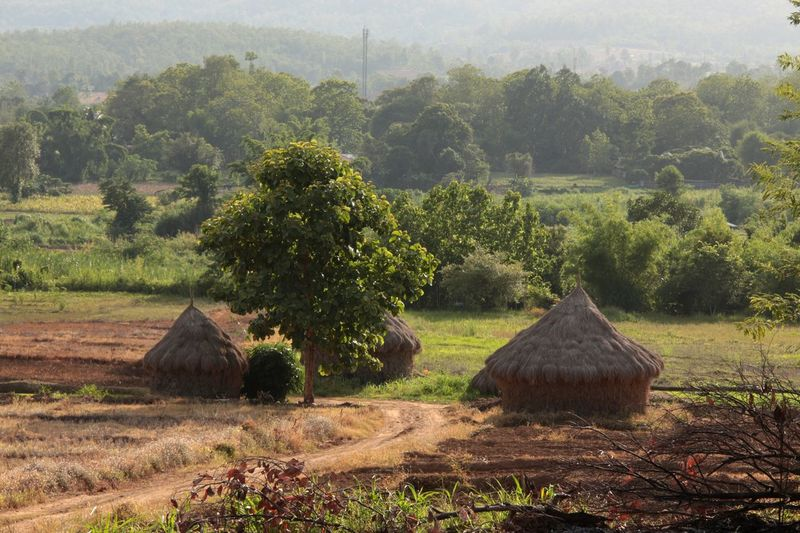 Foggy Morning Countryside Village Local Life Landscape No People in North Thailand South East Asia