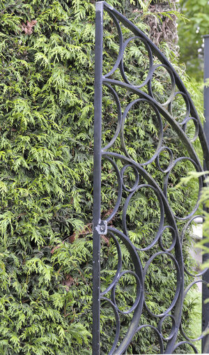 A decorative black metal gate leading to a park. Gate Barrier Blackandwhite Boundary Circles In Circles Circles Pattern Complexity Day Green Color Growth Leaf Metal Metallic Nature No People Outdoors Pattern Plant Safety Security