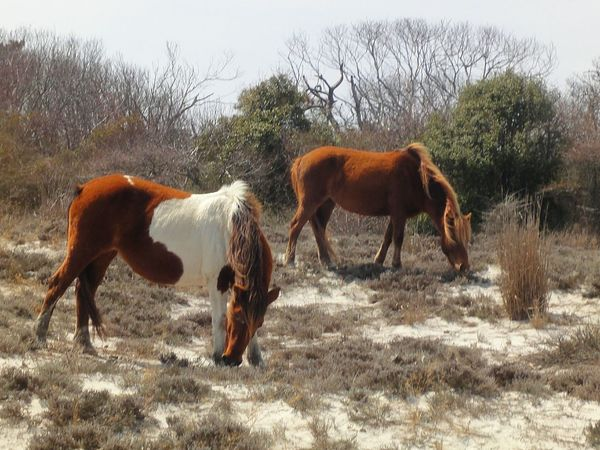 Wild ponies Animal Themes Grasses Grazing Horse Landscape Nature Photograhy Sand Standing Tree Two Animals Wild Ponies Nature's Diversities 43 Golden Moments Fine Art Photography