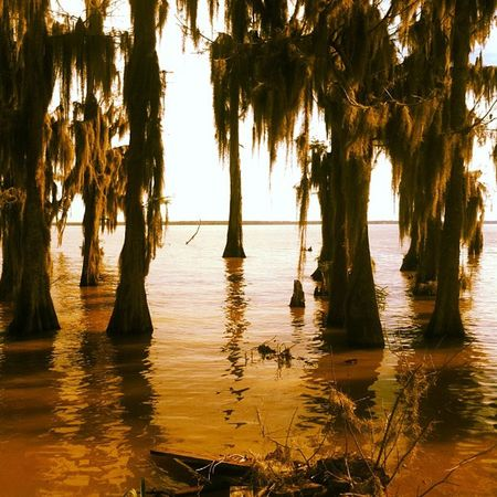Swamp La Louisiana Proud Cajun Bayou