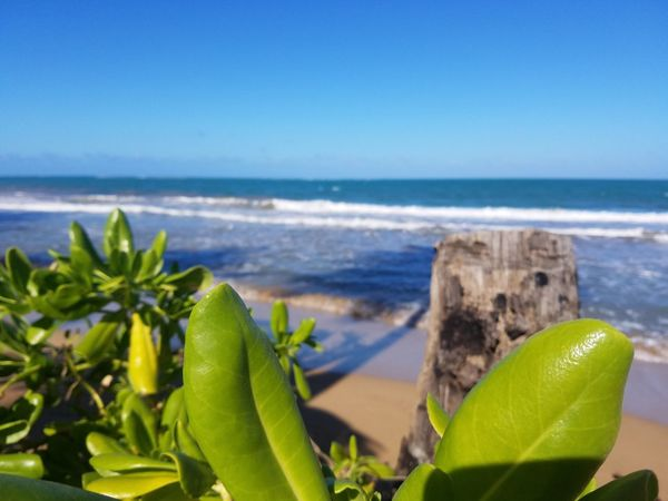 Beach Beauty In Nature Blue Clear Sky Close-up Day Freshness Growth Horizon Over Water Leaf Nature No People Outdoors Plant Scenics Sea Sky Tranquility Water Samsung Galaxy S7 Puerto Rico Check This Out