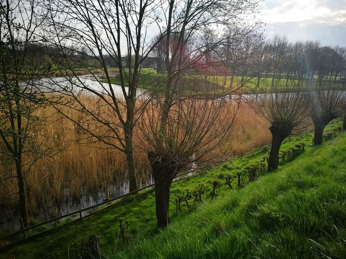 Tree Growth Nature Beauty In Nature No People Outdoors Green Color Scenics Tranquil Scene Dutch Landscapes Dutch Countyside Dutch Landscape Water Landscape Tranquility Rustic Dutch Farmland Lost In The Landscape