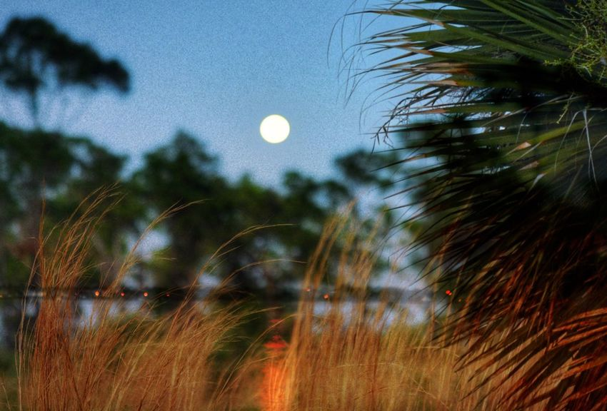 Double Exposure Moonrise over the Indian River Lagoon and Grasses And Pines at the St Sebastian River Preserve State Park Imagine