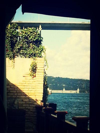 Sea Bosphorus Bridge Foliage