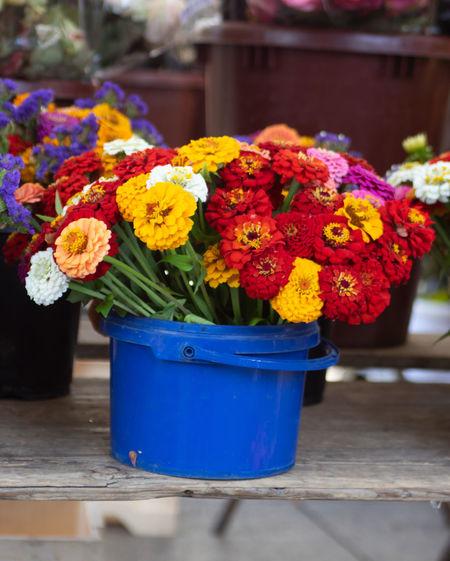 flower Market Summertime Yellow Flower Blue Flower Flowerpot Flowers Red Color Summer Weekly Market Yellow