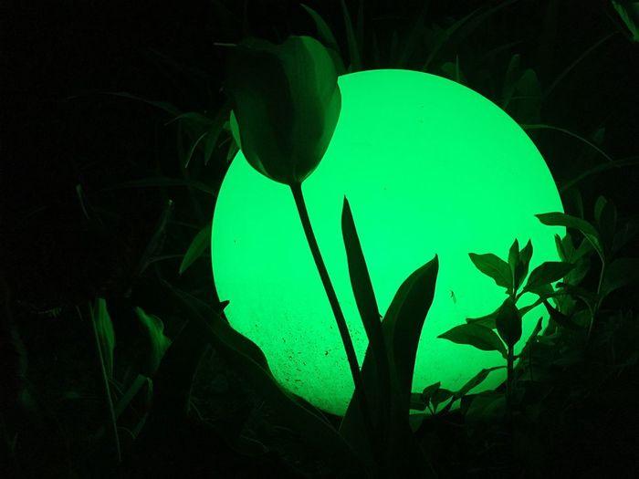 Plant Nature Leaf Plant Part No People Night Silhouette Illuminated