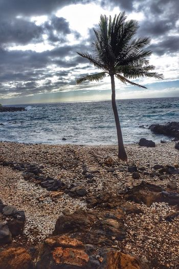 Hawaii Big Island Sea Beach Horizon Over Water Tranquility Sky Nature Water Tree Cloud - Sky Tranquil Scene Beauty In Nature Scenics Sand Outdoors Tree Trunk Day Palm Tree No People Wave First Eyeem Photo