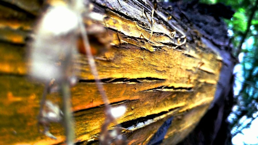 Tree Trunk Textured  Selective Focus Close-up Tree Nature Beauty In Nature Indiapictures Mobilephotography Worldwide_shot Mobile Phone Photography Colour Colours Of Nature Fotor EyeEmNewHere The Street Photographer - 2017 EyeEm Awards Streetsofindia👣 Tree Paint The Town Yellow