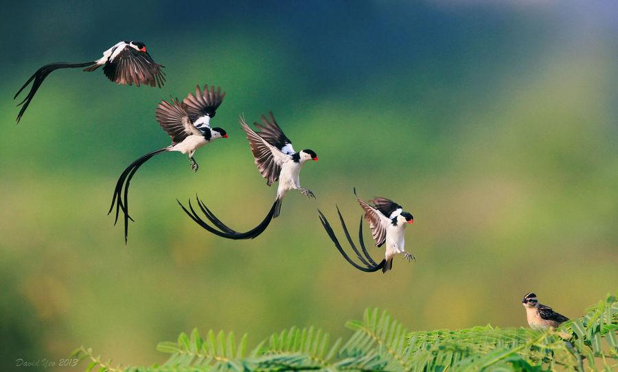 Relaxing Enjoying Life Beautiful Bird Birds