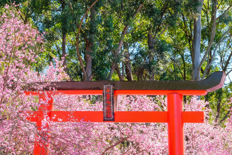 Low angle view of torii gate in park