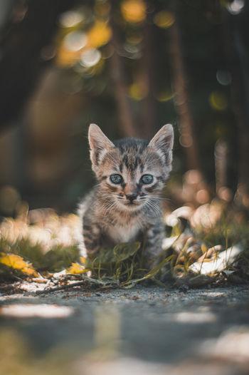 Portrait of kitten on land
