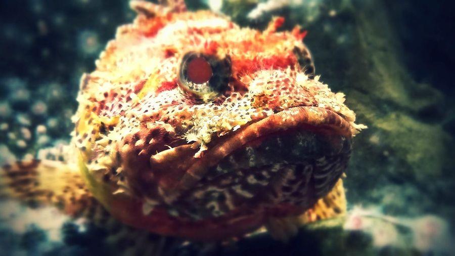 My Best Photo 2015 Fish Grumpy Grumpfish Chicago Scout