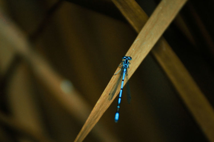 Close-up of an insect dragonfly on wood