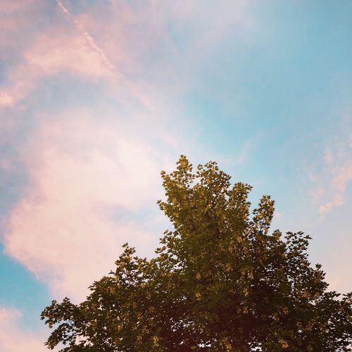 Natur Sommersonnekaktus Wolken Sonne Sommer Sky Plant Tree Cloud - Sky Low Angle View Growth Beauty In Nature Nature Tranquility Outdoors Day Treetop Scenics - Nature No People Sunset Branch Sunlight High Section Leaf Green Color