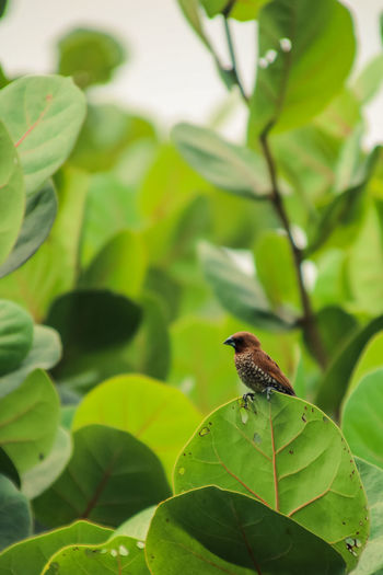 Leaf One Animal Plant Part Animal Themes Animal Wildlife Animals In The Wild Animal Green Color Plant Nature Vertebrate Growth Close-up Bird Focus On Foreground Day Beauty In Nature No People Perching Outdoors