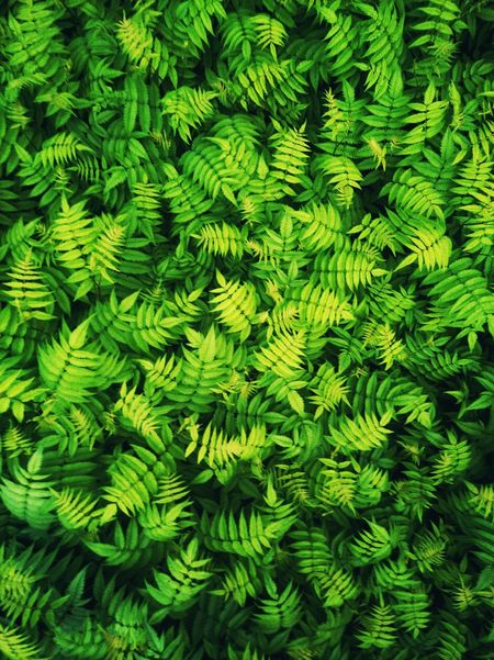 Fern Tree Backgrounds Close-up Plant Green Color Green Grassland Countryside Greenery Young Plant Water Drop Growing Farmland Woods Leaves Stem Leaf Vein