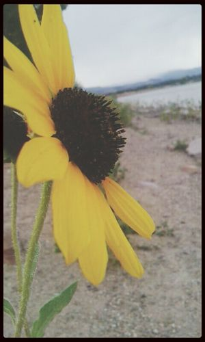 On a walk Flowers Nature Mountain Sunflower
