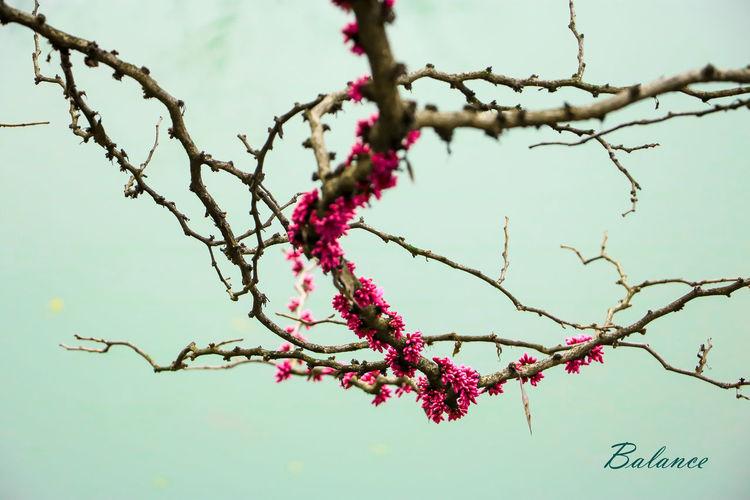 繁花似锦flowers
