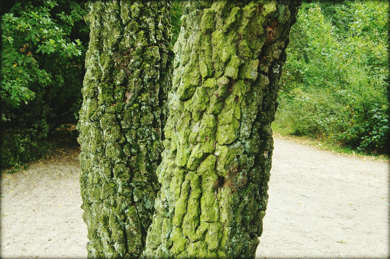 tree trunk, tree, growth, nature, day, green color, plant, no people, outdoors, beauty in nature