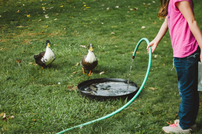 Low section of girl pouring water in container for duck while standing on grassy field at yard