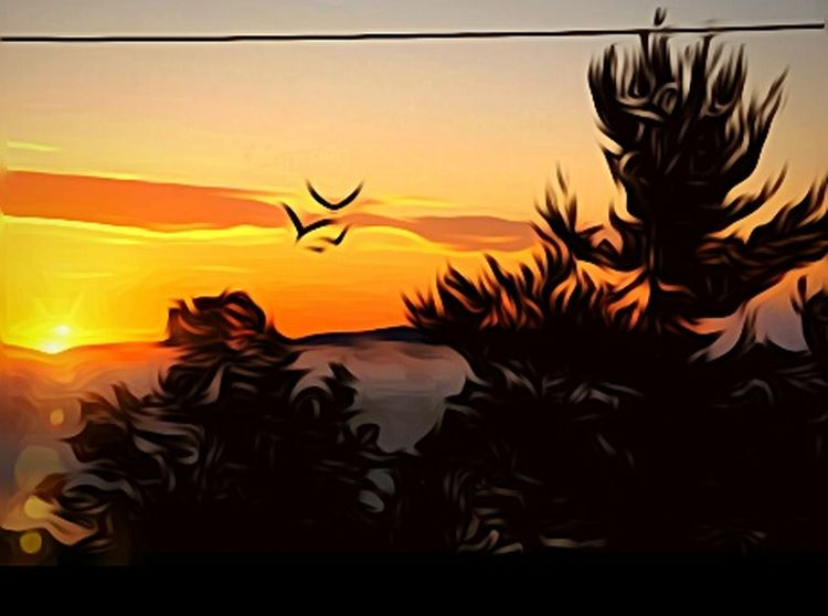 Silhouette Nature Animals In The Wild Sky Flying Bird Glowing Illuminated Oregon Sunrise Horizon Oregon Glow Feel The Journey Oregonexplored EyeEm Gallery Early Morning Getty Images Oregon Beauty Oregon Art Love Photography Showcase July The Portraitist - 2017 EyeEm Awards Fragility Freshness Into The Sky Vacations Paint The Town Yellow
