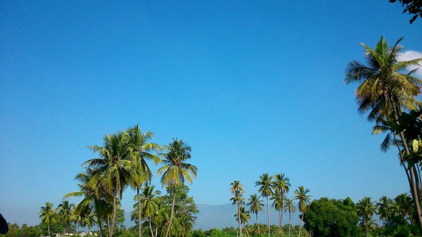 Blue Sky indeed.. Taking Photos Bluesky India
