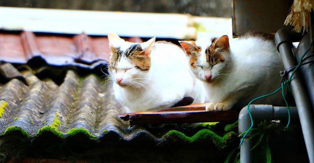 🐈 🐱 Cat Pets