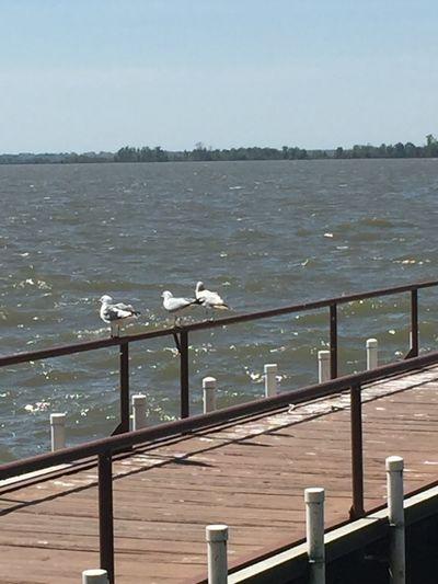 Water Sea Vertebrate Railing Bird Sky Nature