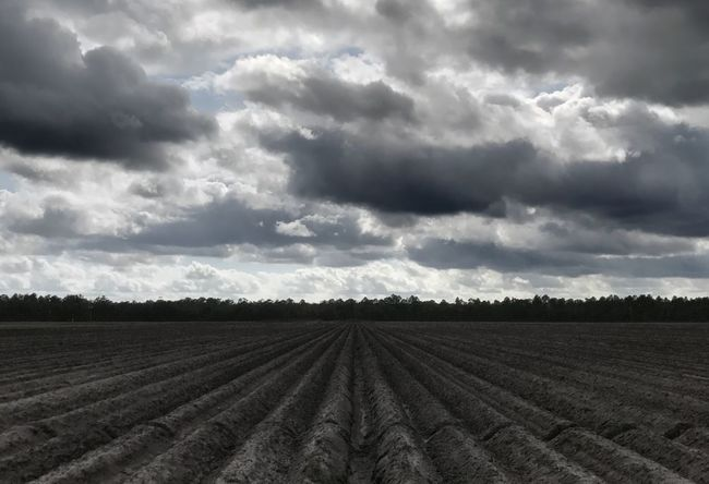 Agricultural field on a mostly cloudy day. Field Agriculture Rural Scene Cloud - Sky Landscape Nature Farm Sky Scenics Skyscape No People Beauty In Nature Rows Row Of Things Crop Production Limited Palette
