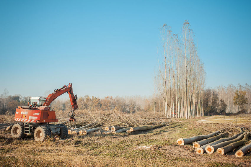 Cutting a forest of poplars: poplars file cut and cranes to move them. Agriculture Construction Machinery Cutting Cutting Trees Day Forest Grapple Machinery Nature No People Outdoors Poplar Sky Tree