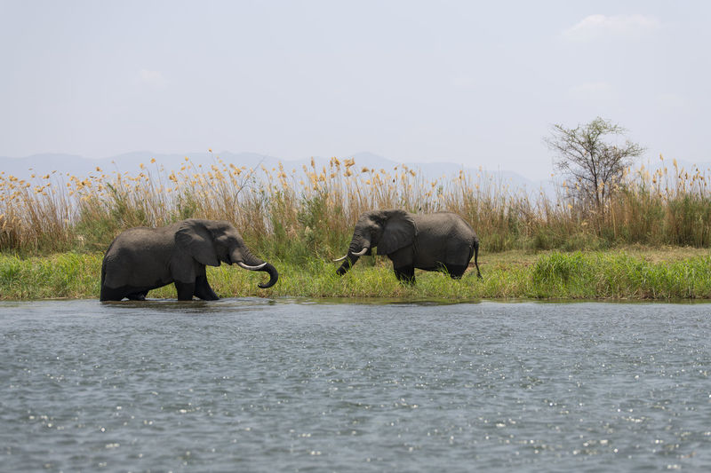 View of elephant in lake against sky