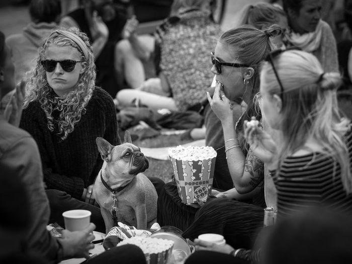 Photos from Copenhagen Celebration Crowd Dog Stella Polaris