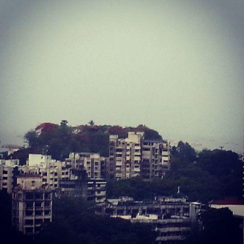 Mazgaonhill Hill Green Trees terraceview rains monsoon buildings mumbai instamumbai