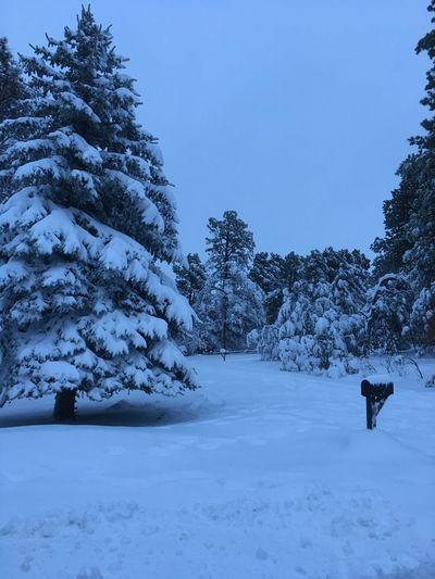 Beautiful Nature Colorado Snow Colorado Life Spring 2016 Snowscape Snowing Early Morning