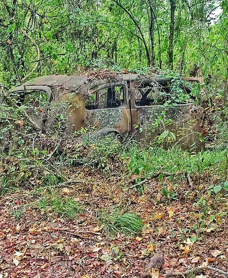 Car Vintage Cars Antique Cars Vines Vines On Car Vine Covered Vine Coverd Trees Weeds Weeds Covering Car Forgotten Car Forgot Things Forgotten Woods Forest Carsofeyeem Weed Covering Car Grown Up Over Grown Vines Over Growth Trees Hidden Car Hidden In Plain Sight Lost In Time Salvage Car Salvage