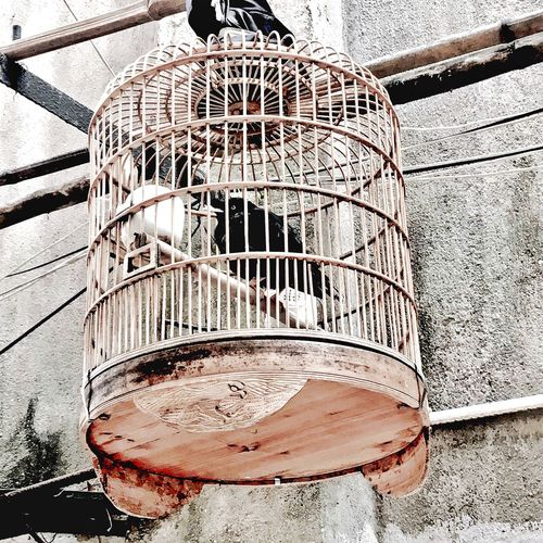 Cage Metal Birdcage No People Metal Grate Day Trapped Close-up Outdoors Bird Cage Bird Cage# On The Street Bird Cage Style Blackbird Merl Captive Bird Birdcage In China Shanghai Streets China Photos Bird Birds Caged Pet Portraits