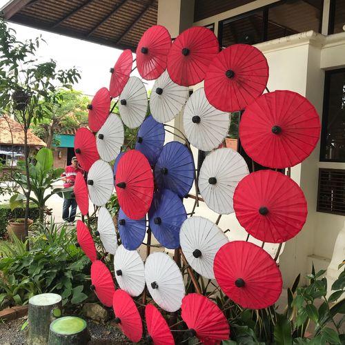 Umbrellas maker EyeEm Sibonys Umbrellas Multi Colored No People Day Hanging Decoration Plant Art And Craft Nature