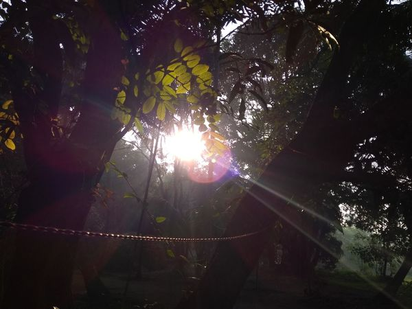 Sun Rays Sun Sunlight Sunrays Sunray Sunrays Through The Branches Sunray Of Light Leaf Leaves Darkness And Light Lens Flare Tree Low Angle View No People Outdoors Night Nature Beauty In Nature The Street Photographer - 2018 EyeEm Awards The Great Outdoors - 2018 EyeEm Awards The Creative - 2018 EyeEm Awards