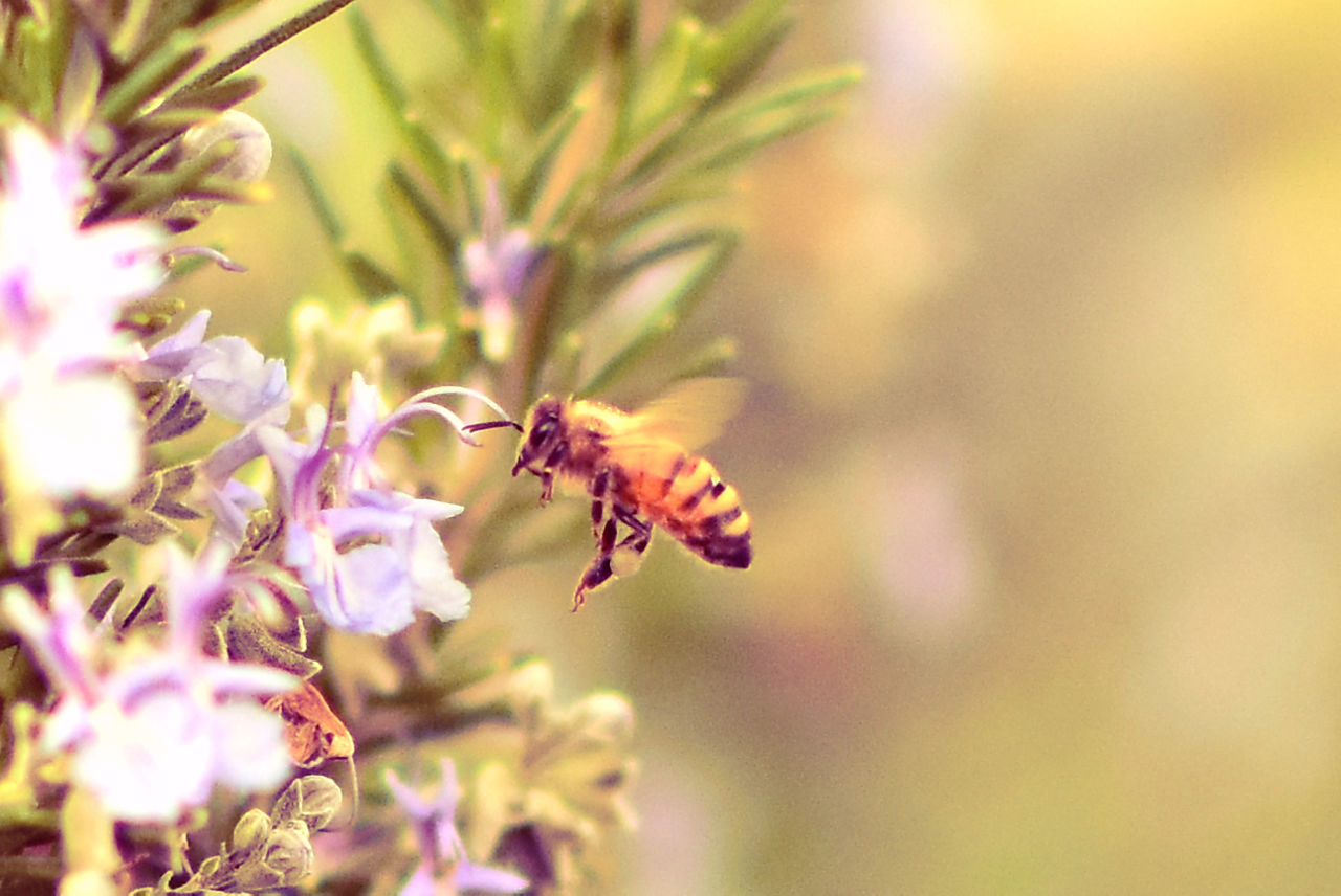 insect, nature, animals in the wild, one animal, animal themes, flower, growth, beauty in nature, fragility, plant, no people, pollination, outdoors, close-up, day, bee, freshness