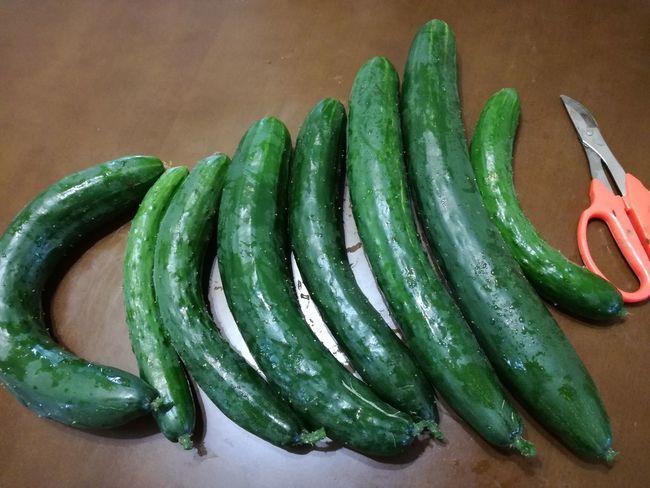 今朝収穫した きゅうり 。ハサミの隣が標準サイズの きゅうり なので、一番大きいサイズの きゅうり のでかさが際立ちます。さてどうやって食べましょうか。 Green Color Vegetable Healthy Eating Food And Drink Food Cucumber Raw Food Freshness EyeEm Best Shots Nature Beauty In Nature EyeEmBestPics EyeEm Gallery EyeEm Best Shots - Nature