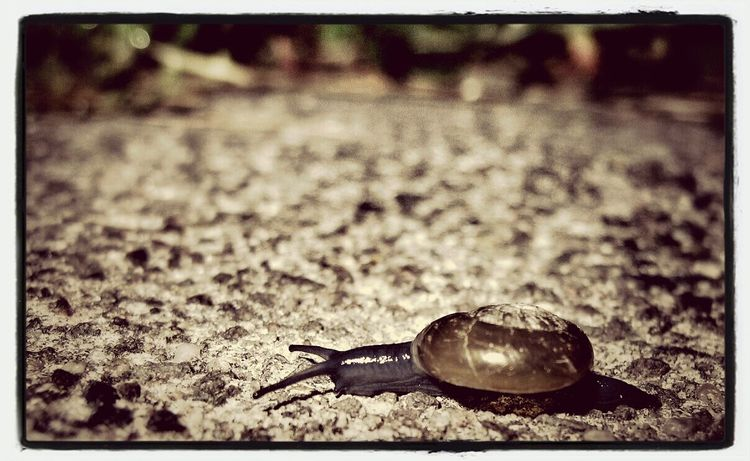 small snail Natur Nature Outdoors Animals