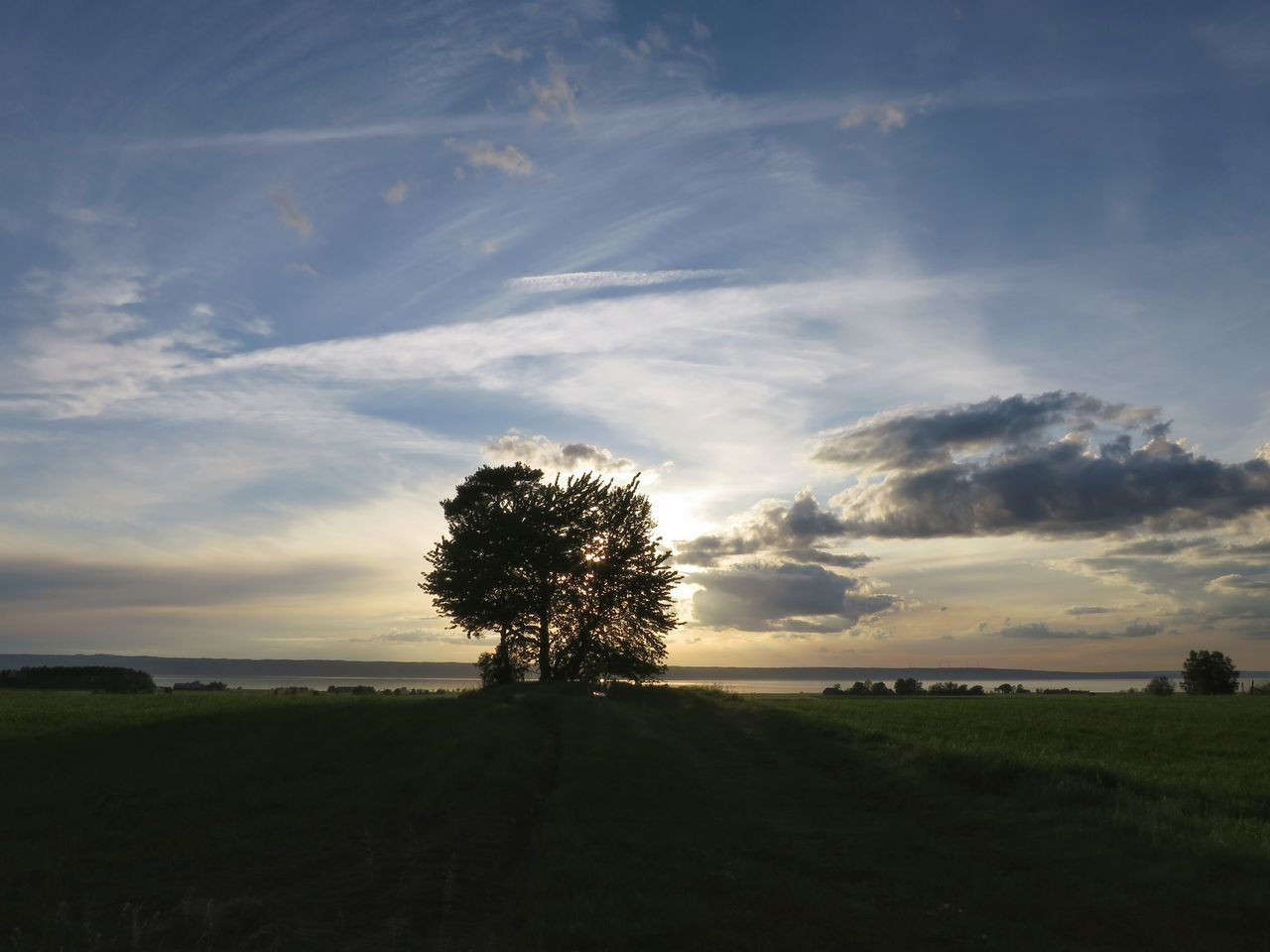 landscape, tranquility, tranquil scene, tree, nature, sky, beauty in nature, scenics, field, cloud - sky, solitude, sunset, grass, lone, no people, outdoors, silhouette, day