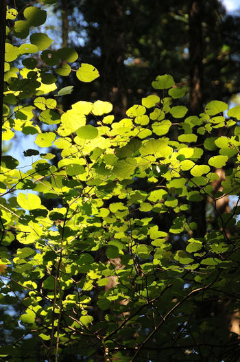 Close-up of leaves on tree in forest